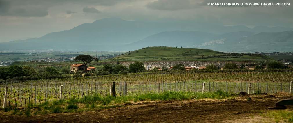Vineyard Tour and Wine Tasting