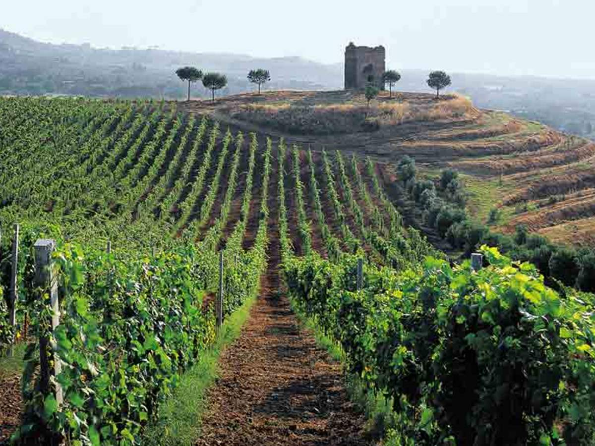 Half Day Roman Countryside Vineyard Estate Tour and Wine Tasting